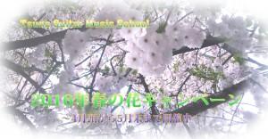 二〇一六年春の花キャンペーン